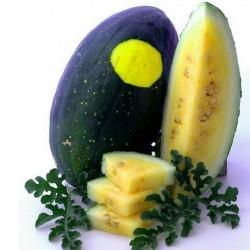 100 Samen Gelbe Wassermelone Mond und Sterne 10 - 6