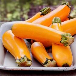 SOLEIL Zucchini Orange frö