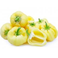 DIAMOND söt paprika frön (vit)