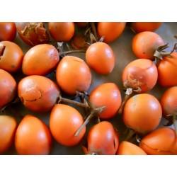 Semi di Bakula - Spanish Cherry 2.95 - 3