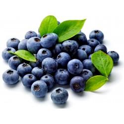 Bilberry Fröer (Vaccinium...