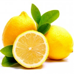 Limun Seme (Citrus x limon) 1.95 - 1