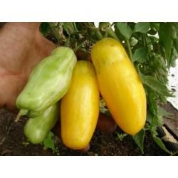 Banana Legs Tomate Samen 1.85 - 3