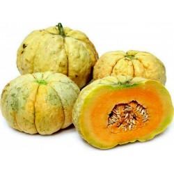 Honigmelone PRESCOTT FOND BLANC Samen 2.45 - 1