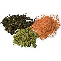 Sementes de Lentilha planta (Lens culinaris) 1.85 - 1