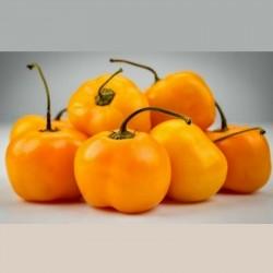 """Semillas de Chile amarillo dulce """"Jelena"""" - Frutas grandes 1.75 - 1"""