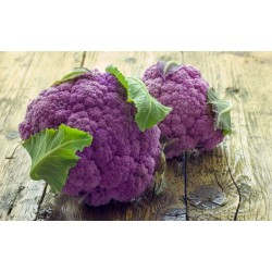 Purple Cauliflower Seeds 2.75 - 3