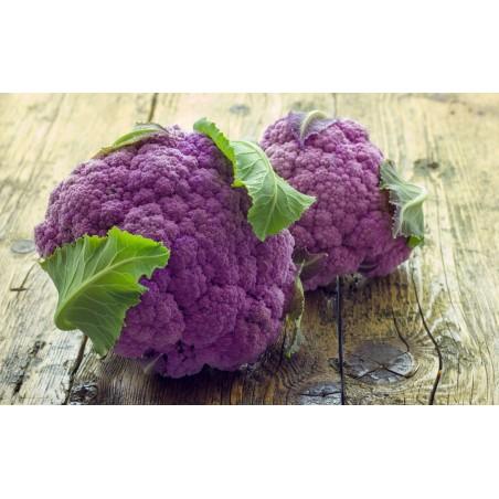 Purple Cauliflower Seeds 2.75 - 3