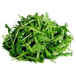 600 Semi di ruchetta – rucola (Eruca sativa) 2.5 - 1