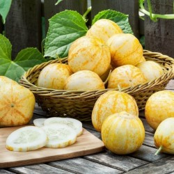 Lemon Gurke Zitronengurke Samen 1.95 - 2