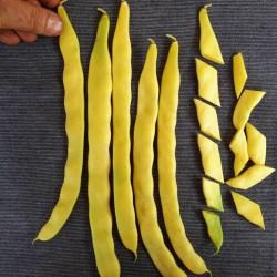 Graines de Haricots Merveille de Venise 1.85 - 2