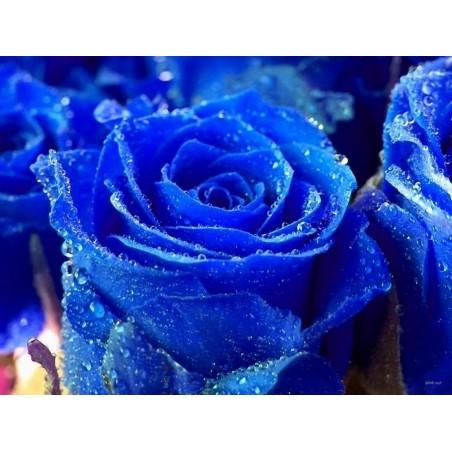 Blue Rose Flower Seeds