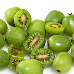 Σπόροι μίνι ακτινίδιο -34C (Actinidia arguta) 1.5 - 3