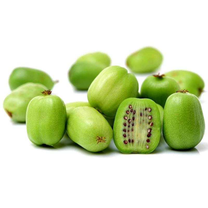 Sementes De Actinidia Arguta - Baby Kiwi Resistentes geada -34C 1.5 - 1