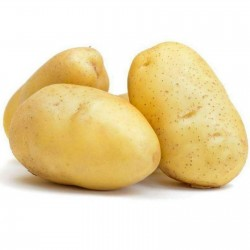White Skin - White Flesh KENNEBEC Potato Seeds  - 4