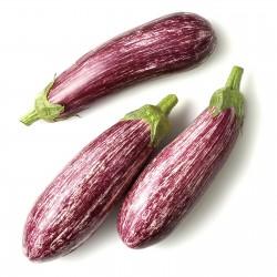 Greek Eggplant Seeds TSAKONIKI  - 4
