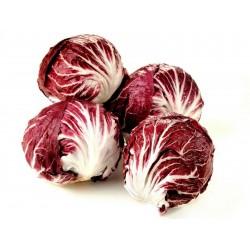 Chicoree Samen Radicchio Red Verona  - 1
