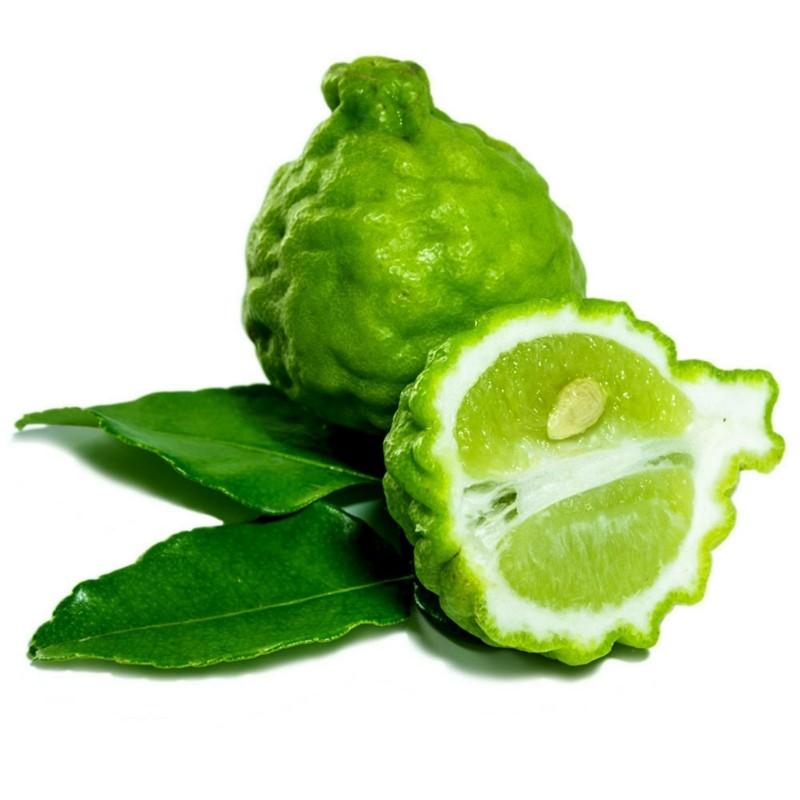 COMBAVA ili KAFFIR LIMETA Seme (Citrus hystrix)  - 1