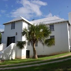 Seme Palme Bermuda Palmetto  - 3