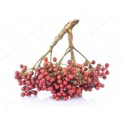 Japanese Pepper - Sanshō Seeds (Zanthoxylum piperitum)  - 2