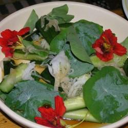 Καπουτσίνο αναμικτοι Σπόροι - φαγώσιμο, θεραπευτικό  - 3
