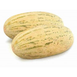 Mirzachul, Gulabi, Torpedo Melon Seeds Seeds Gallery - 6