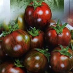 Svart Vernissage Tomatfrö