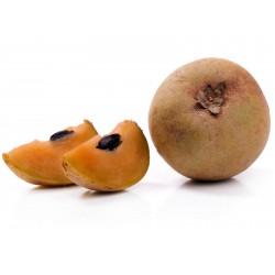 Semillas de Manilkara zapota, Chicle  - 5