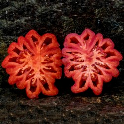 Graines de Tomate Pink Zapotec Ou Pink Accordion Seeds Gallery - 6