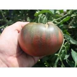 Graines Tomate ancienne noire 'Cherokee purple' Seeds Gallery - 2