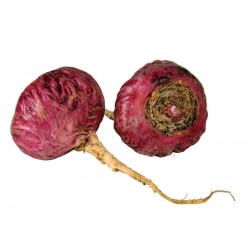 Rotes Maca Samen (Lepidium meyenii)  - 3