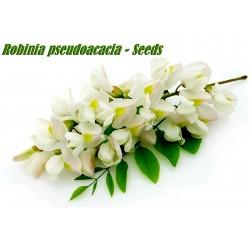 Semi di Robinia o Acacia (Robinia pseudoacacia)  - 9