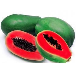 Graines de Papayer rouge - Rare (Carica papaya)  - 4