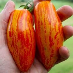 Semillas de tomate SWEET CASADAY  - 1