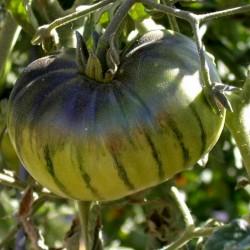 ARBUZNYI (Wassermelone) Tomatensamen Seeds Gallery - 3