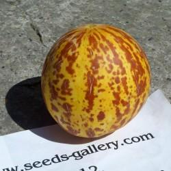 Semi di Melone Tigre Dall'Armenia  - 6