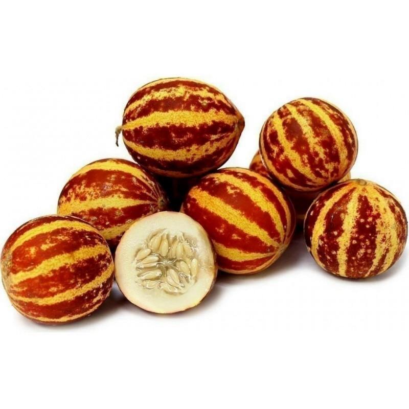 Semi di Melone Tigre Dall'Armenia  - 7