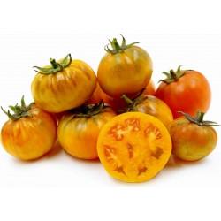 Semente de tomate Orange Purple Smudge  - 1