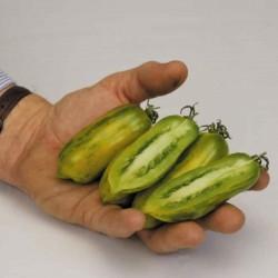 Graines de tomate Saucisse Verte (Green sausage)  - 4