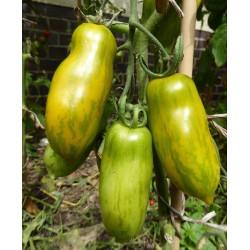 Graines de tomate Saucisse Verte (Green sausage)  - 5