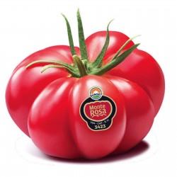 Monte Rosa rebrasti roze paradajz seme Seeds Gallery - 8