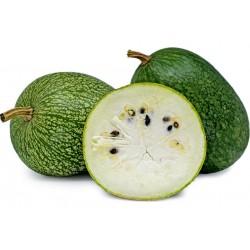 Chilacayote - Figleaf Gourd seeds (Cucurbita ficifolia)  - 5