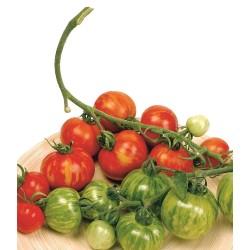 Graines de tomate Tigerella  - 2