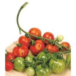 Tigerella paradajz seme  - 2