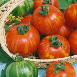 Graines de tomate Tigerella  - 3