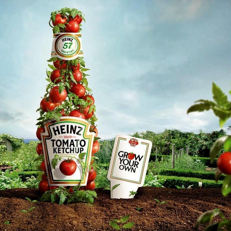 Heinz 1350 Tomato Seeds  - 2