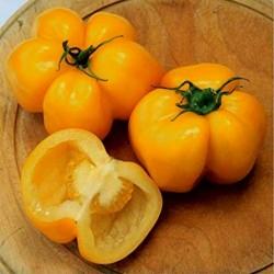 Graines de tomate Yellow Stuffer  - 4