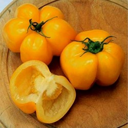 Yellow Stuffer Tomato Seeds  - 4