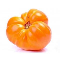 Tomato Seeds Oxheart Orange - Bull's Heart Seeds Gallery - 3