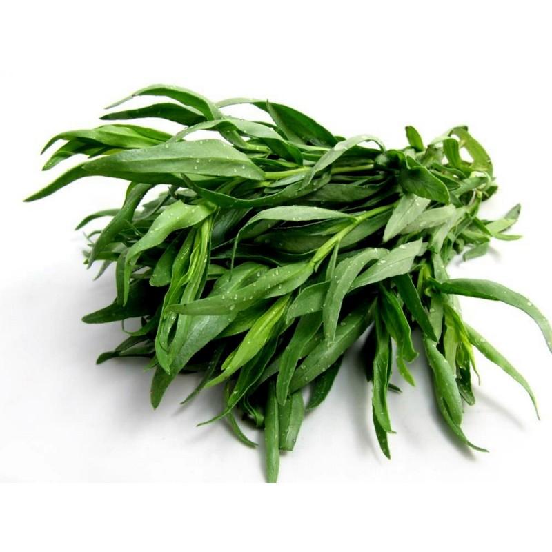 Tarragon Seeds Herb  - 2
